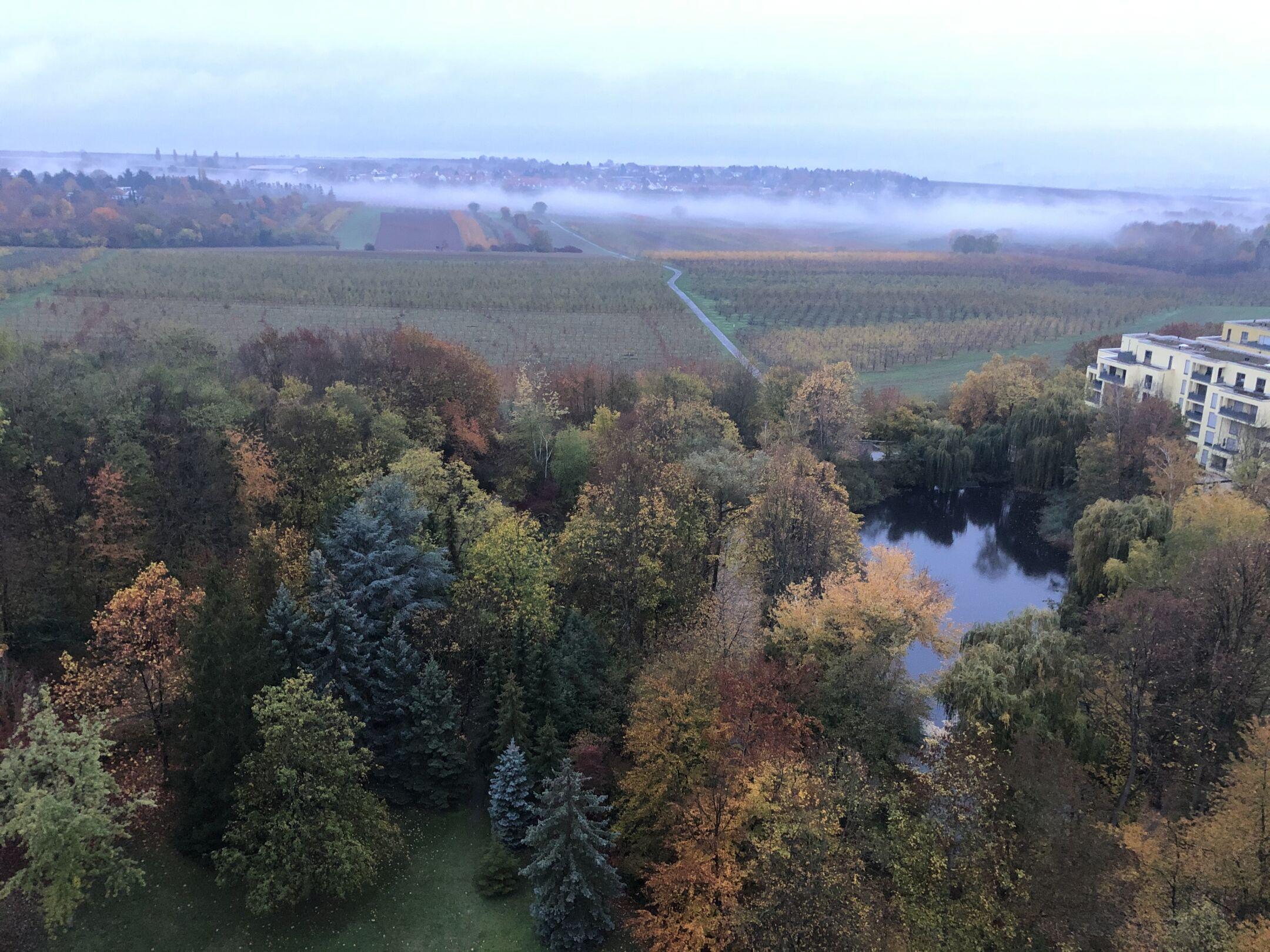 Осенний утренний туман над садом