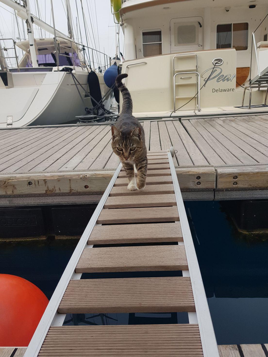 Новый член экипажа на яхте