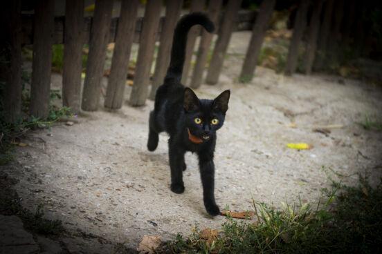 Коты-кошки-котята ПМР.