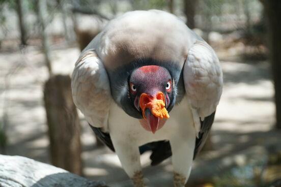 Серьезная такая птичка