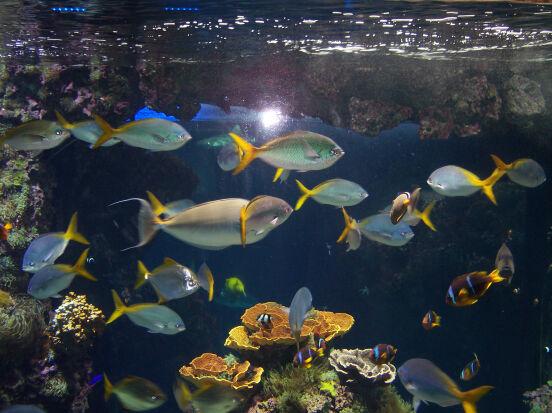 Музей Океанографии в Монако.