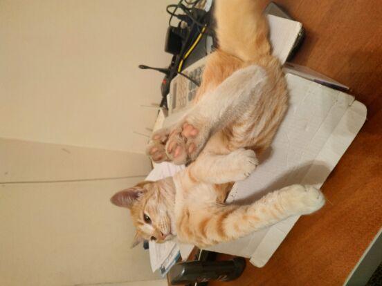 Как отвлечь кота, когда он мешает?