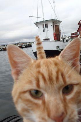sevenpics presents - Норвежский кот Матроскин поджидал нас каждый вечер на пирсе
