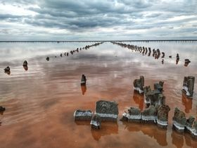 Pink lake. Ukraine