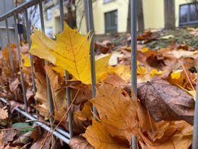 Осенние краски 🎨