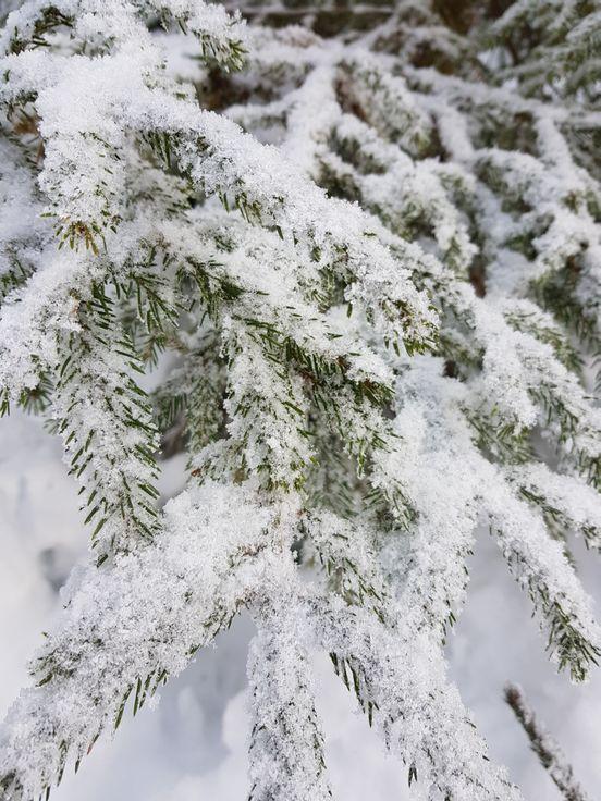 sevenpics presents - Winterwald