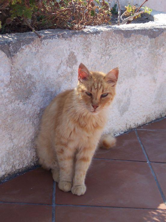 sevenpics presents - Просто рыжий кот. Kamari, Santorini.