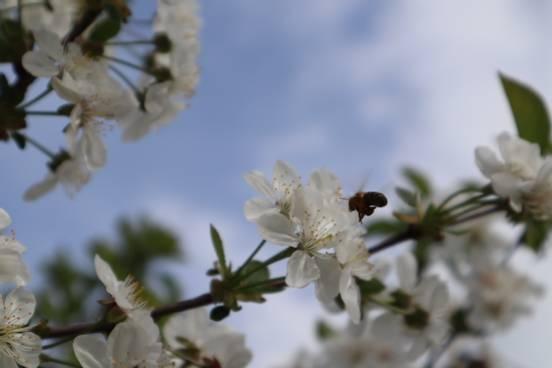 sevenpics presents - Spring 🌸🐝