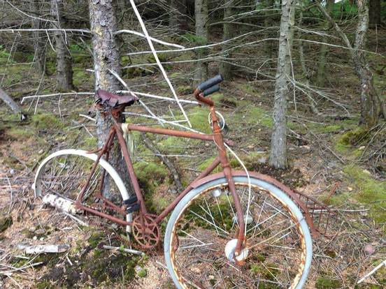 sevenpics presents - Verrostetes Fahrrad aus dem Wald