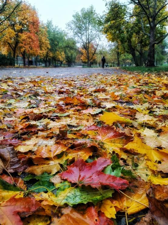 sevenpics presents - Осень - это вдохновение❤️