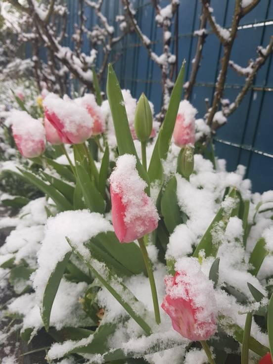sevenpics presents - Цветы под снегом, Зима прощается