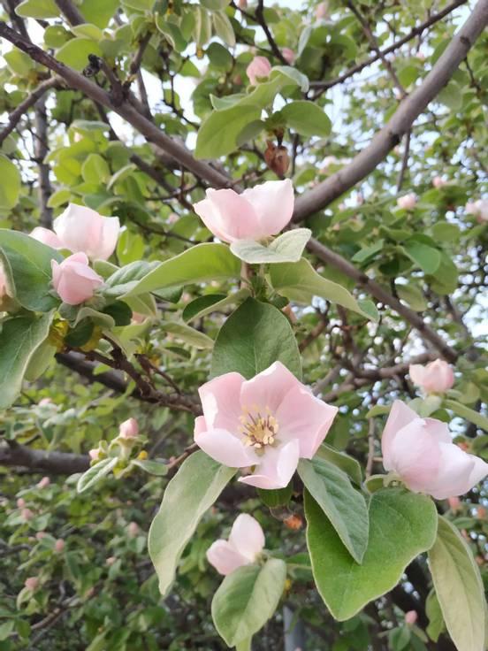 sevenpics presents - Spring mood
