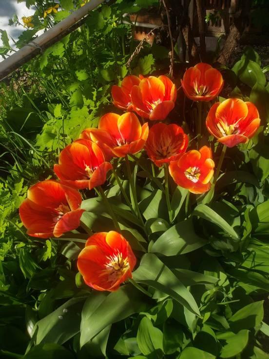 sevenpics presents - Весенний сад