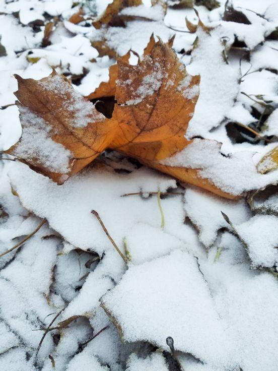 sevenpics presents - Наконец-то снег..
