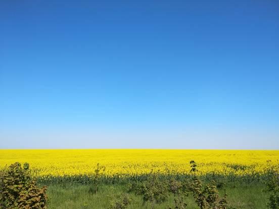 sevenpics presents - Рапсовые поля Украины. Солнце на земле ☀️🌿