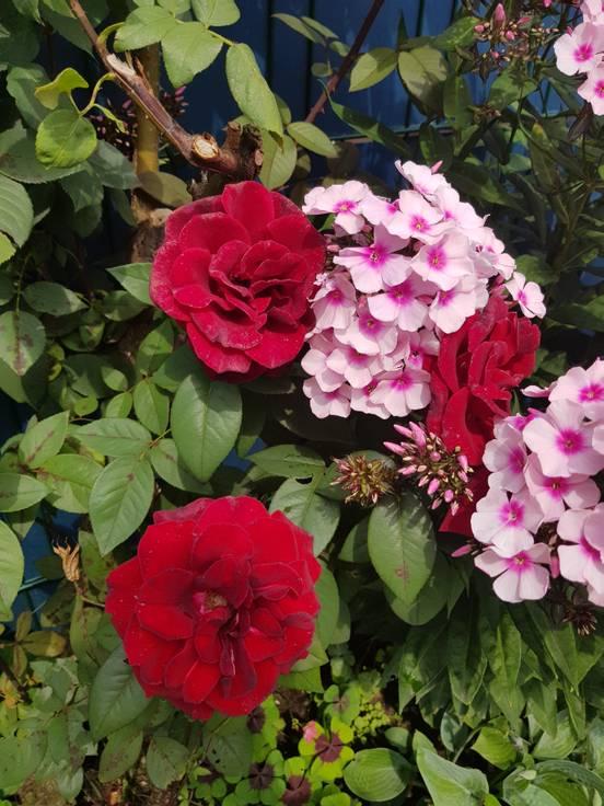 sevenpics presents - Про�то кра�ивые цветы