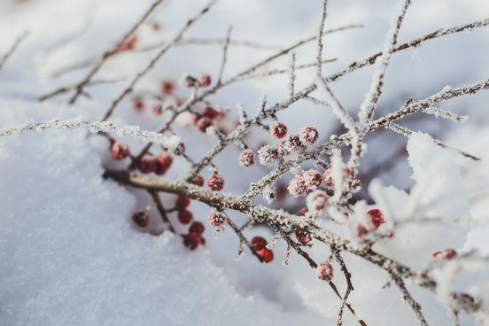 sevenpics presents - Winter beauty