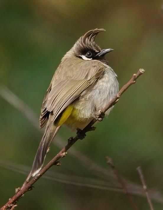 sevenpics presents - Красивые птицы