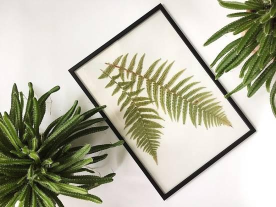 sevenpics presents - Wenn Pflanzen zum Kunstobjekt werden