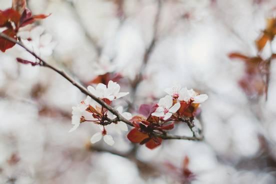 sevenpics presents - Весна