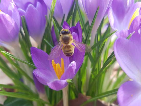 sevenpics presents - Первые весенние цветы