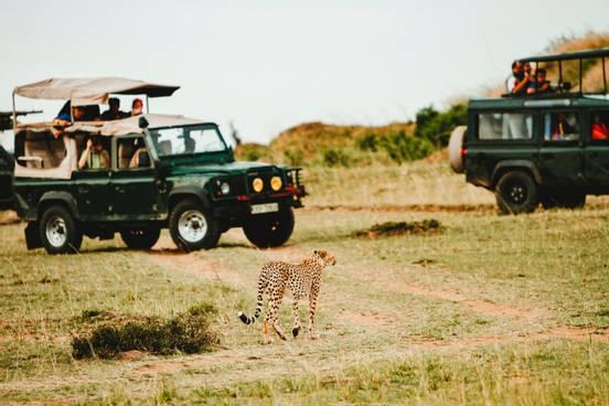 sevenpics presents - 5 Beste afrikanische Safari-Traumziele