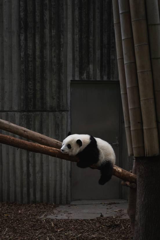 sevenpics presents - Chengdu