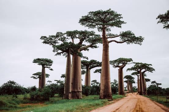 sevenpics presents - Мадагаскар- 5 захватывающих вещей, чтобы исследовать в стране острова