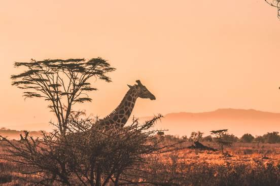 sevenpics presents - 5 найкращих місць для африканських сафарі