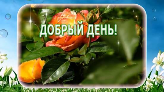 sevenpics presents - Добрый день!