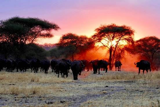 sevenpics presents - Top 5 Places to Visit in Tanzania