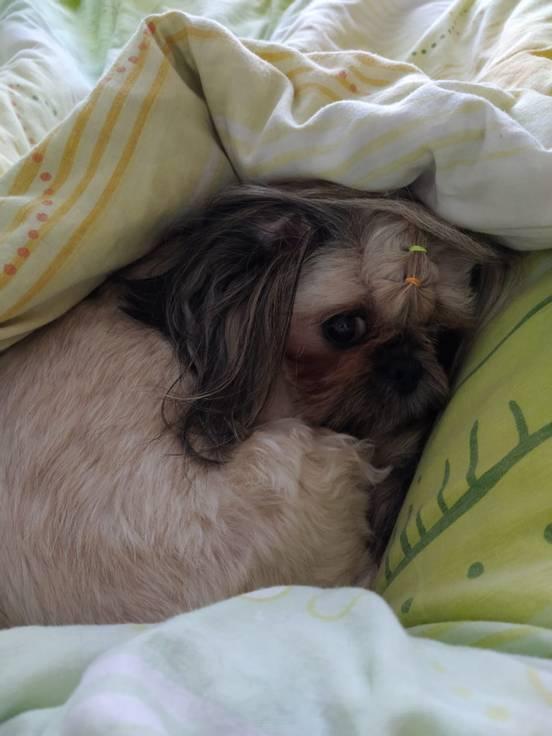 sevenpics presents - Не люблю и не хочу я рано вставать !