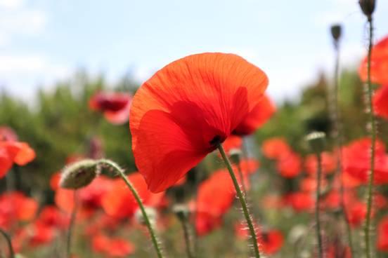 sevenpics presents - Perfect flower ❤️