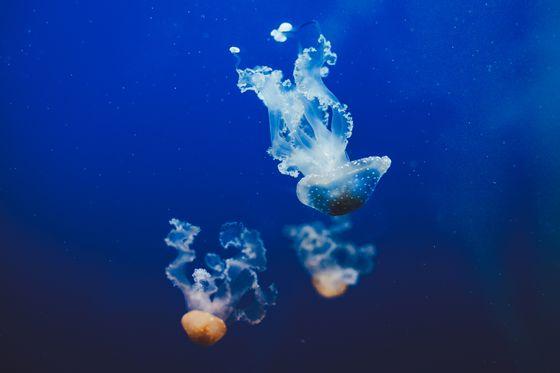 sevenpics presents - Haus des Meeres
