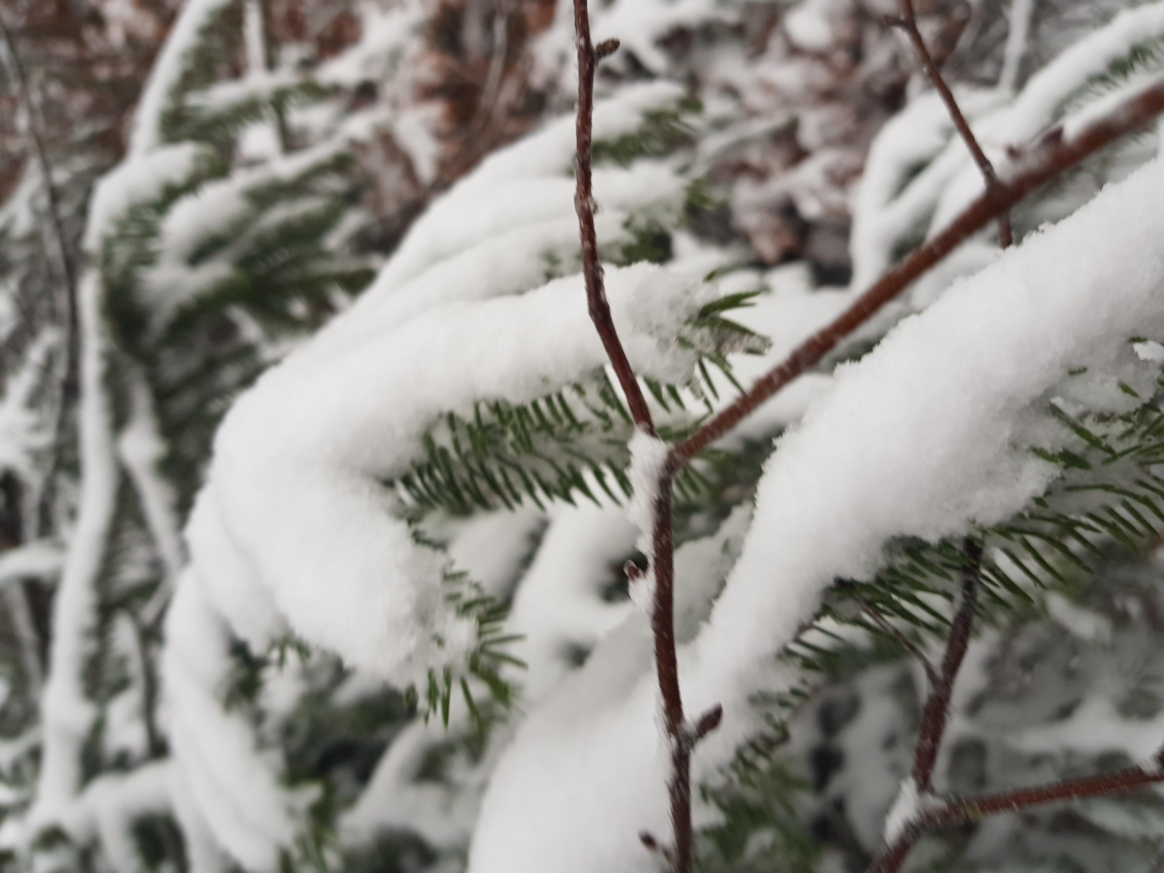 sevenpics presents - Ура, зима пришла ❄