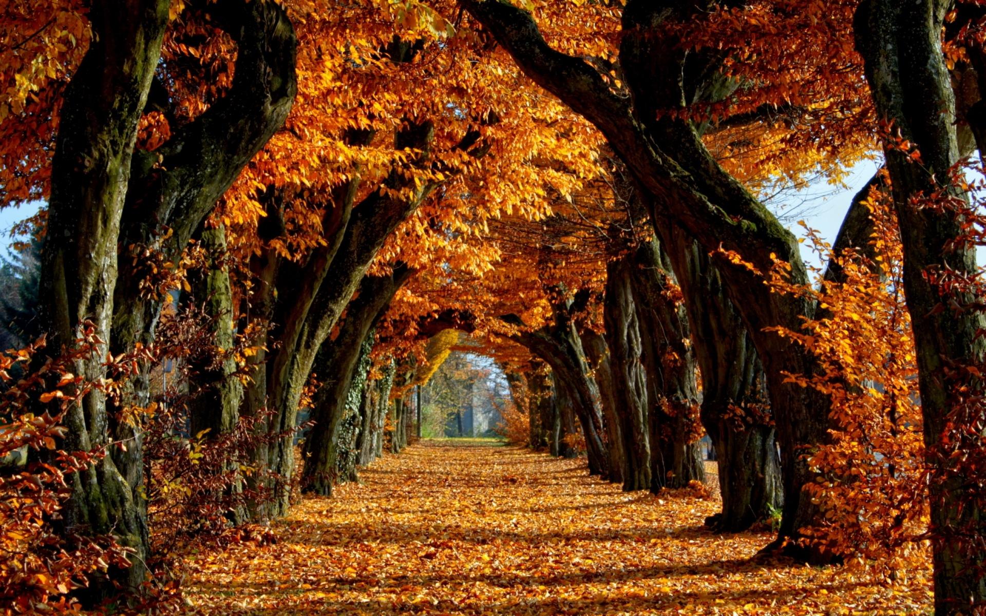Чудо-Осень
