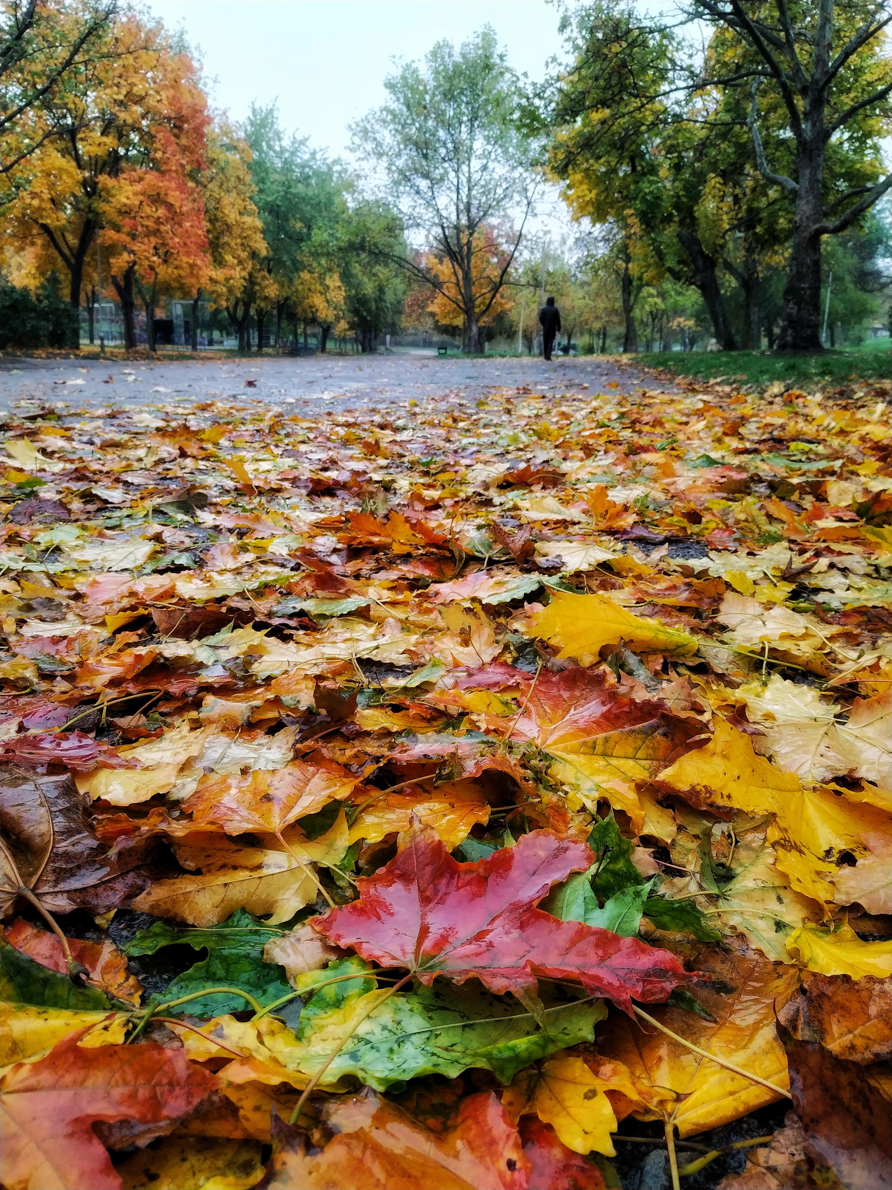Осень - это вдохновение❤️