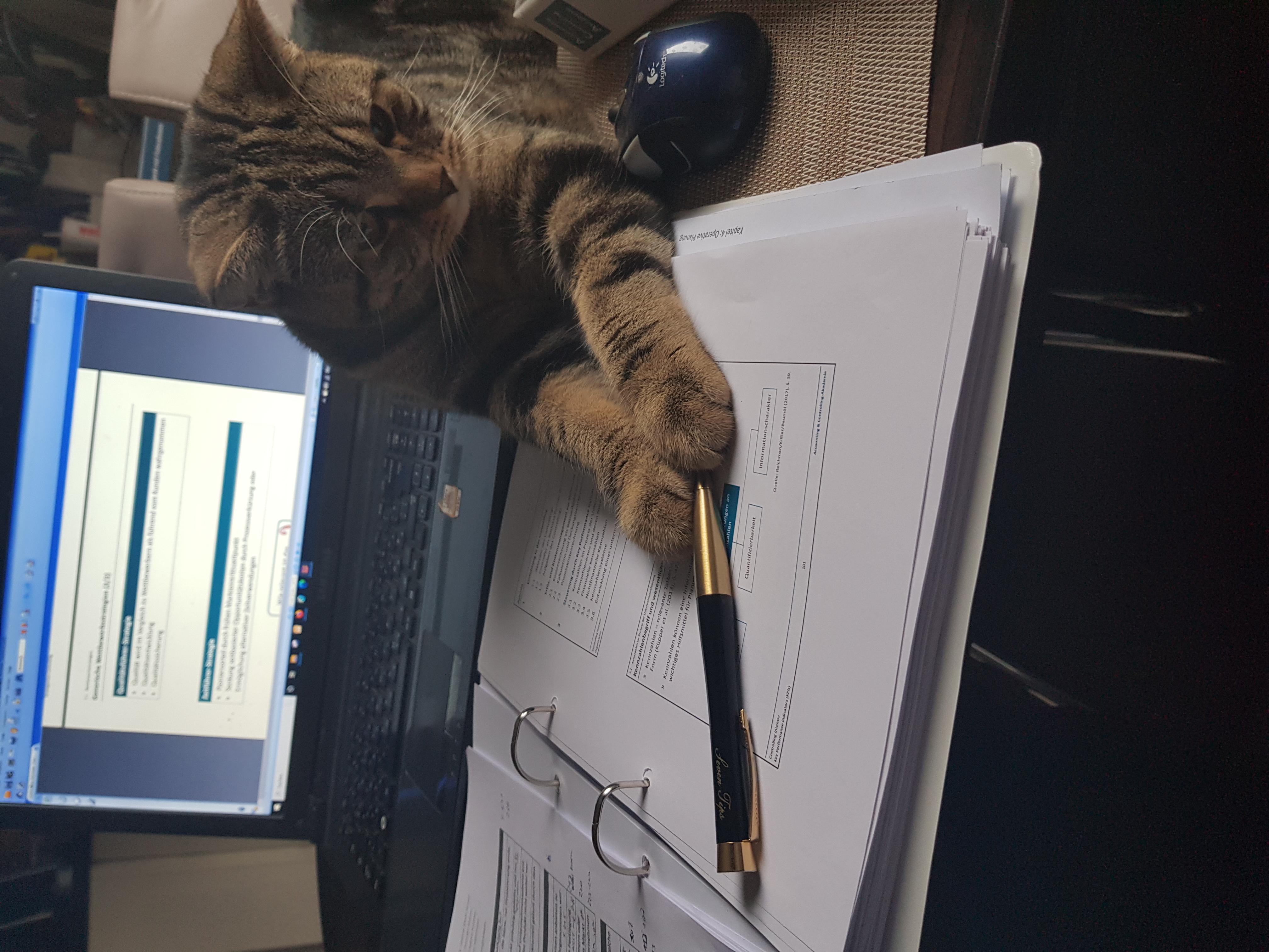 Проф. кот Мило принимает экзамен