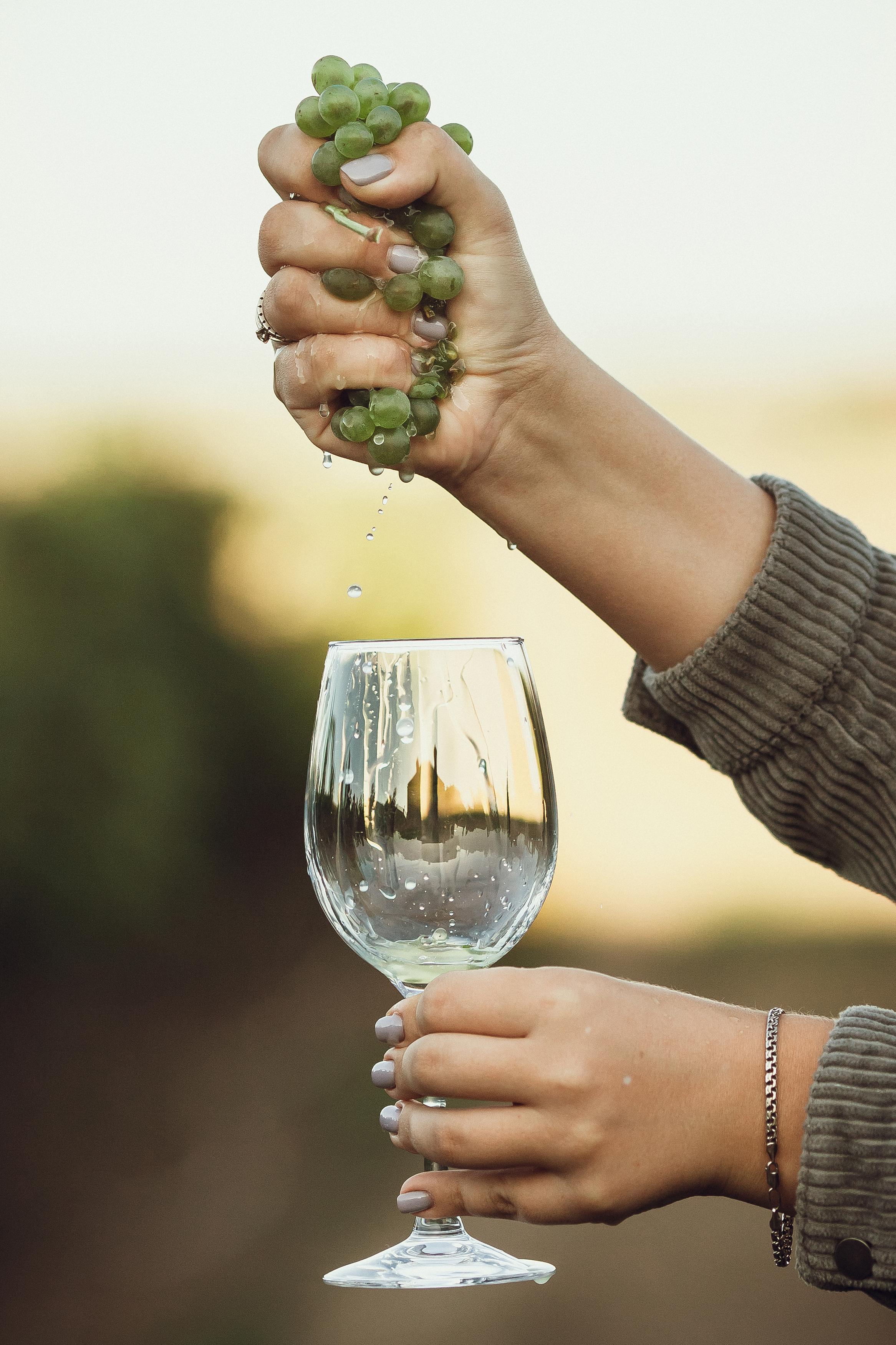 День вина и сбор урожая