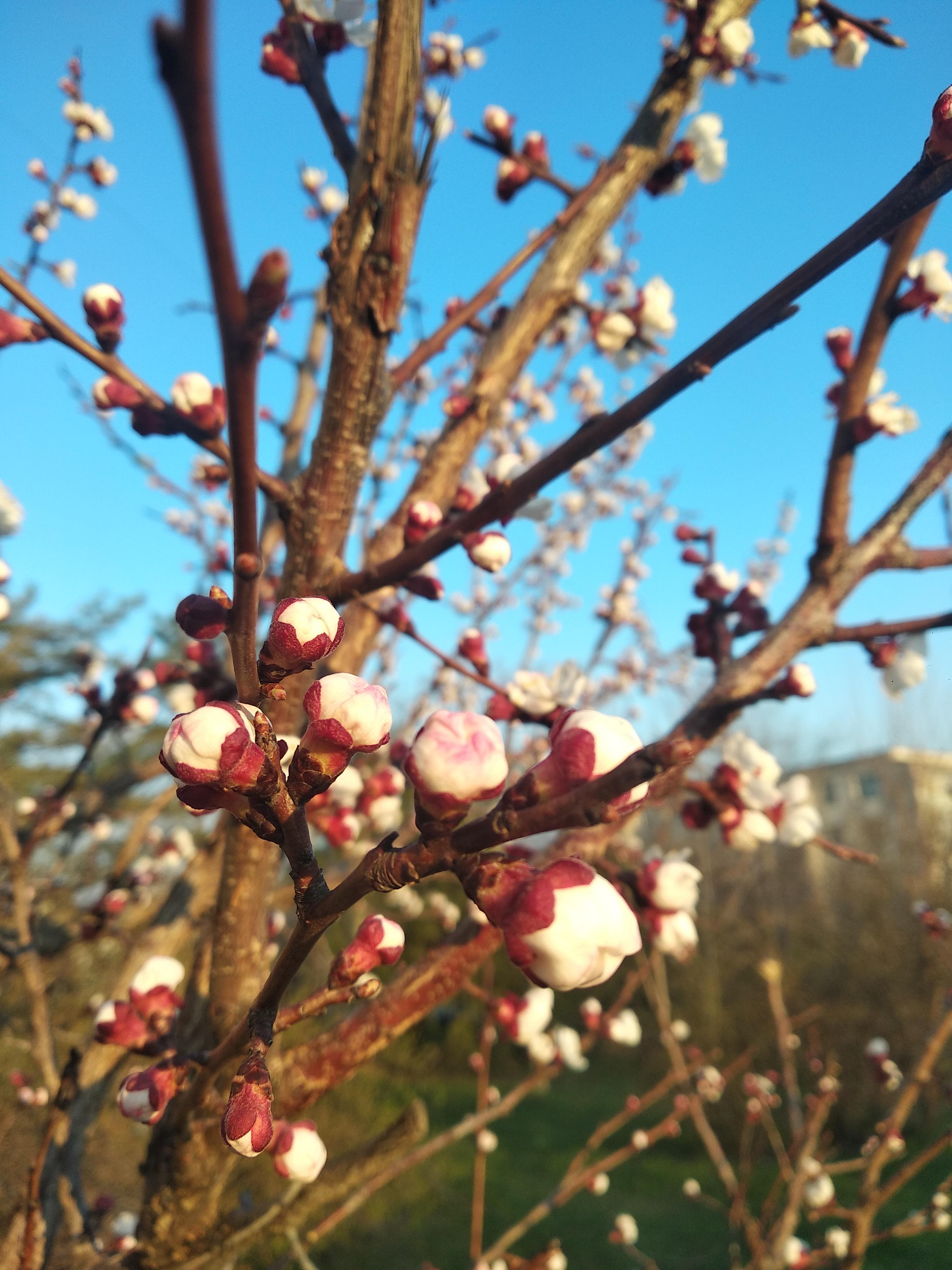 Весна прорывается 😊☀️+18