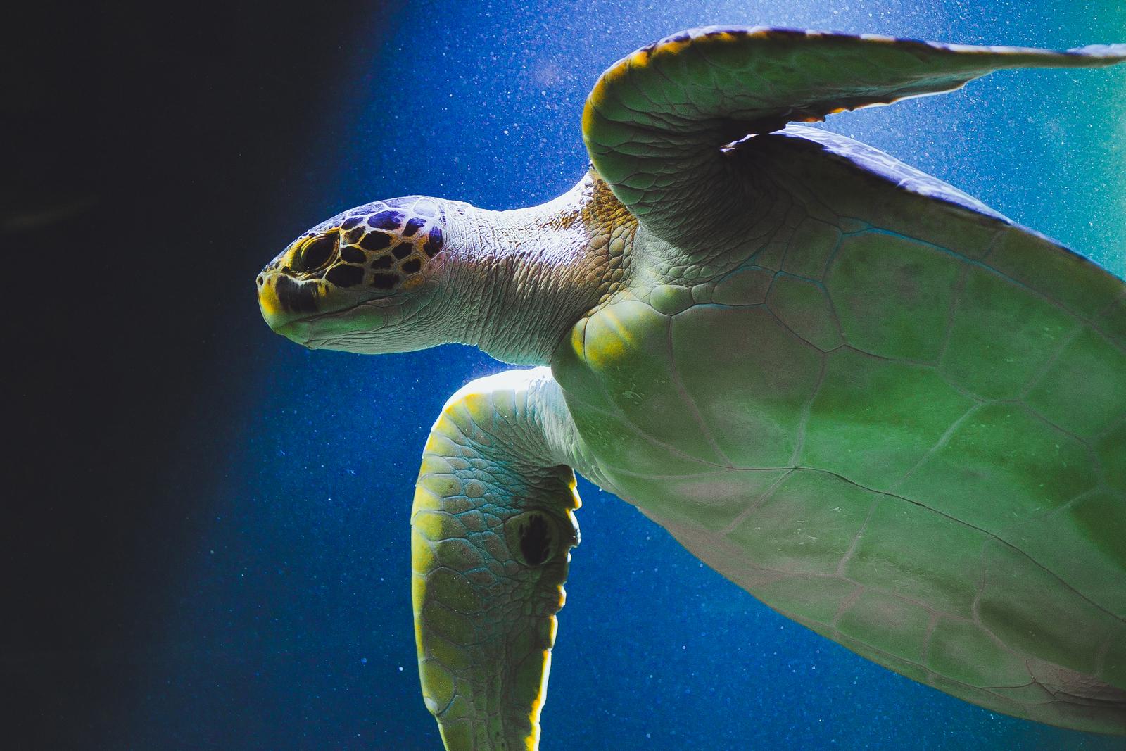 Haus des Meeres Aqua Terra Zoo