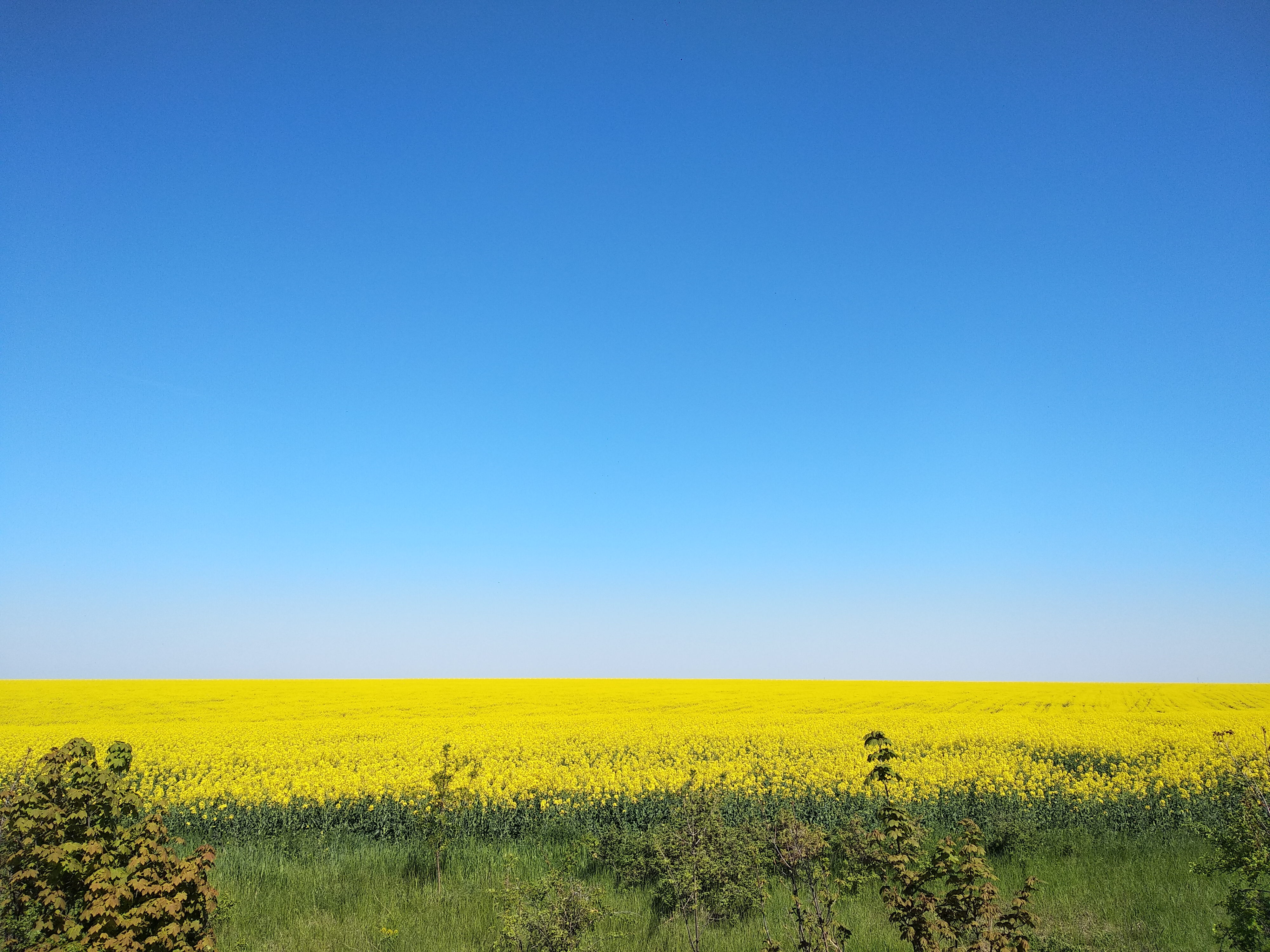 Рапсовые поля Украины. Солнце на земле ☀️🌿