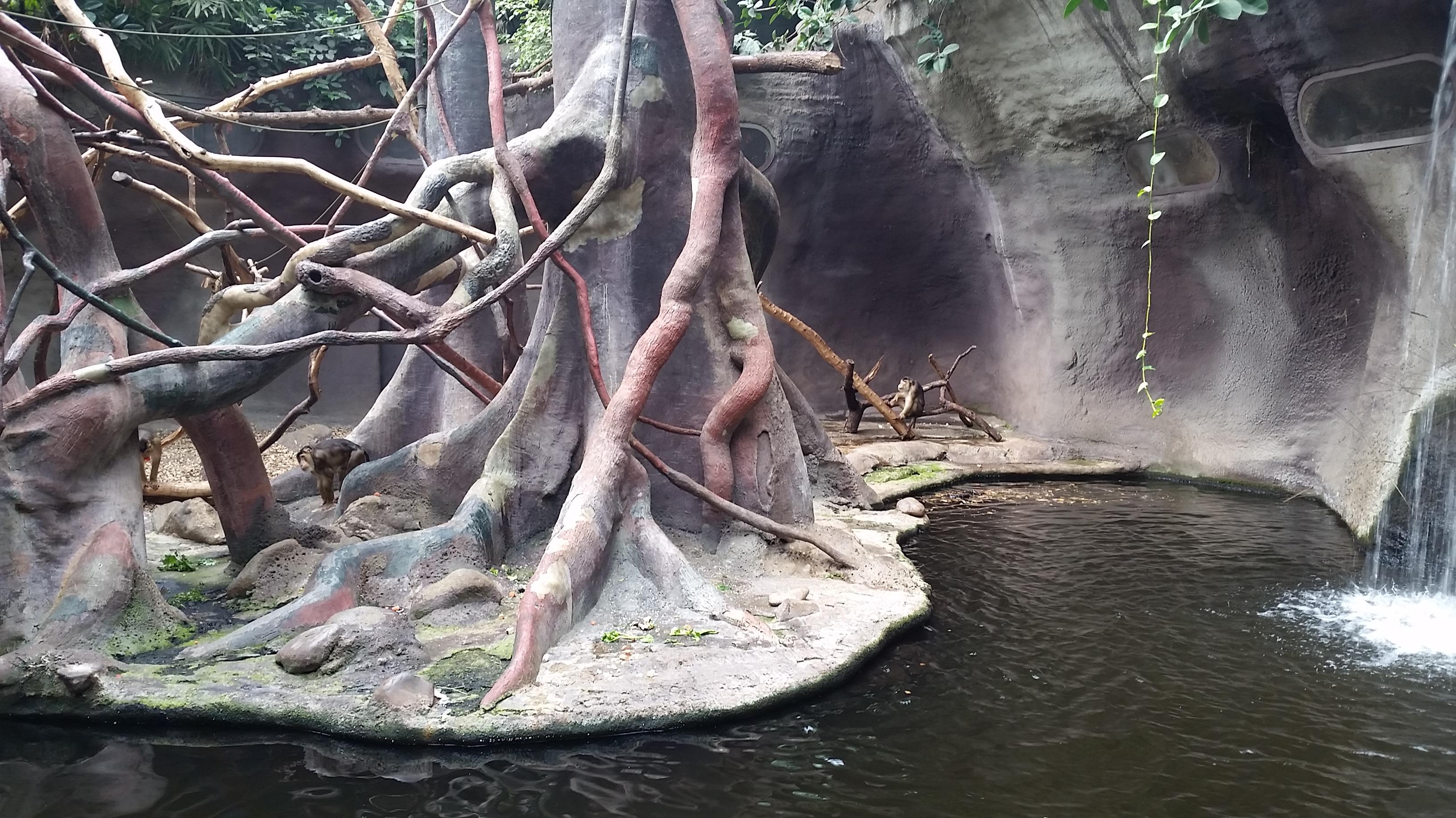Индонезийские джунгли в пражском зоопарке