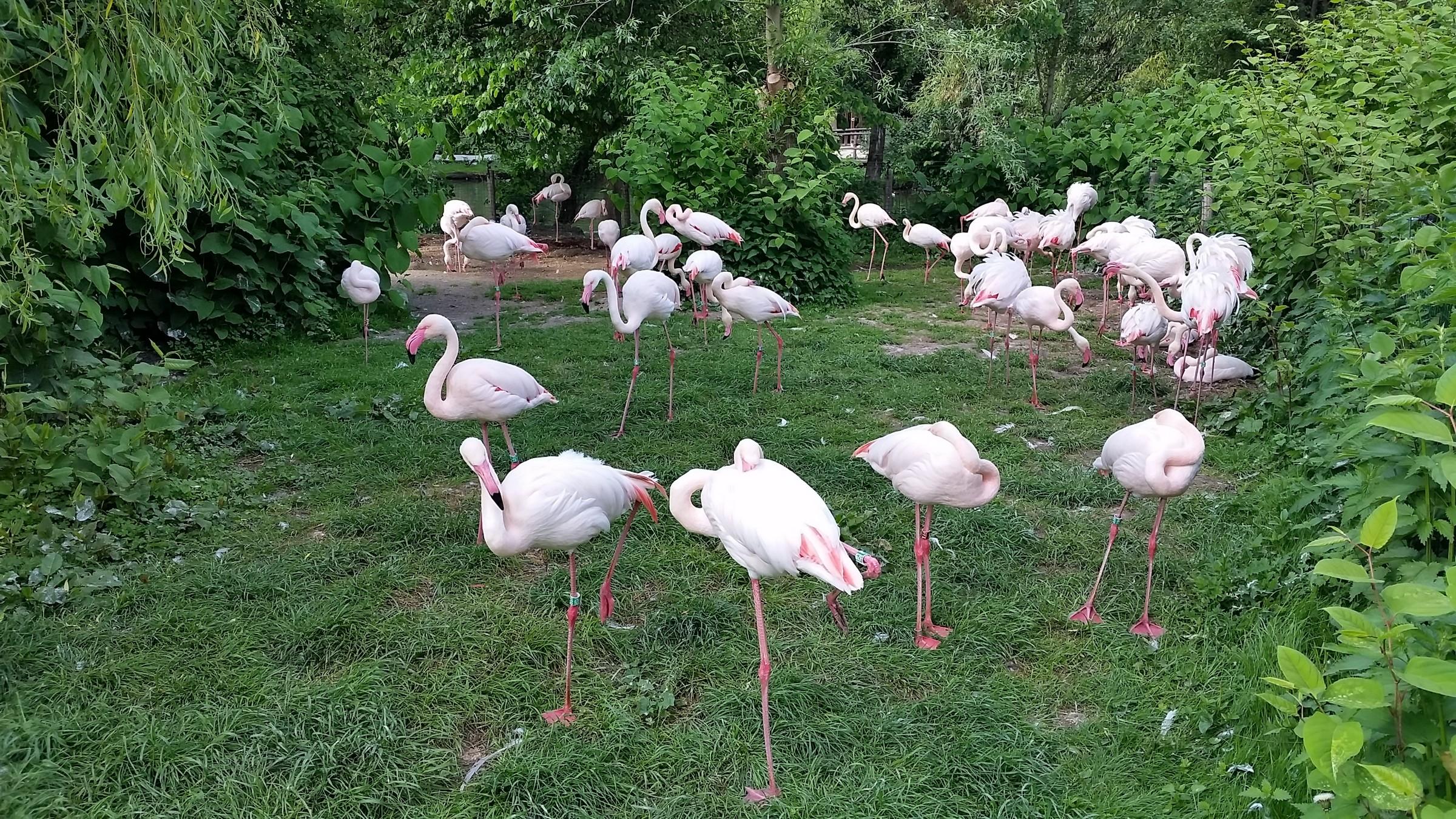 В пражском зоопарке