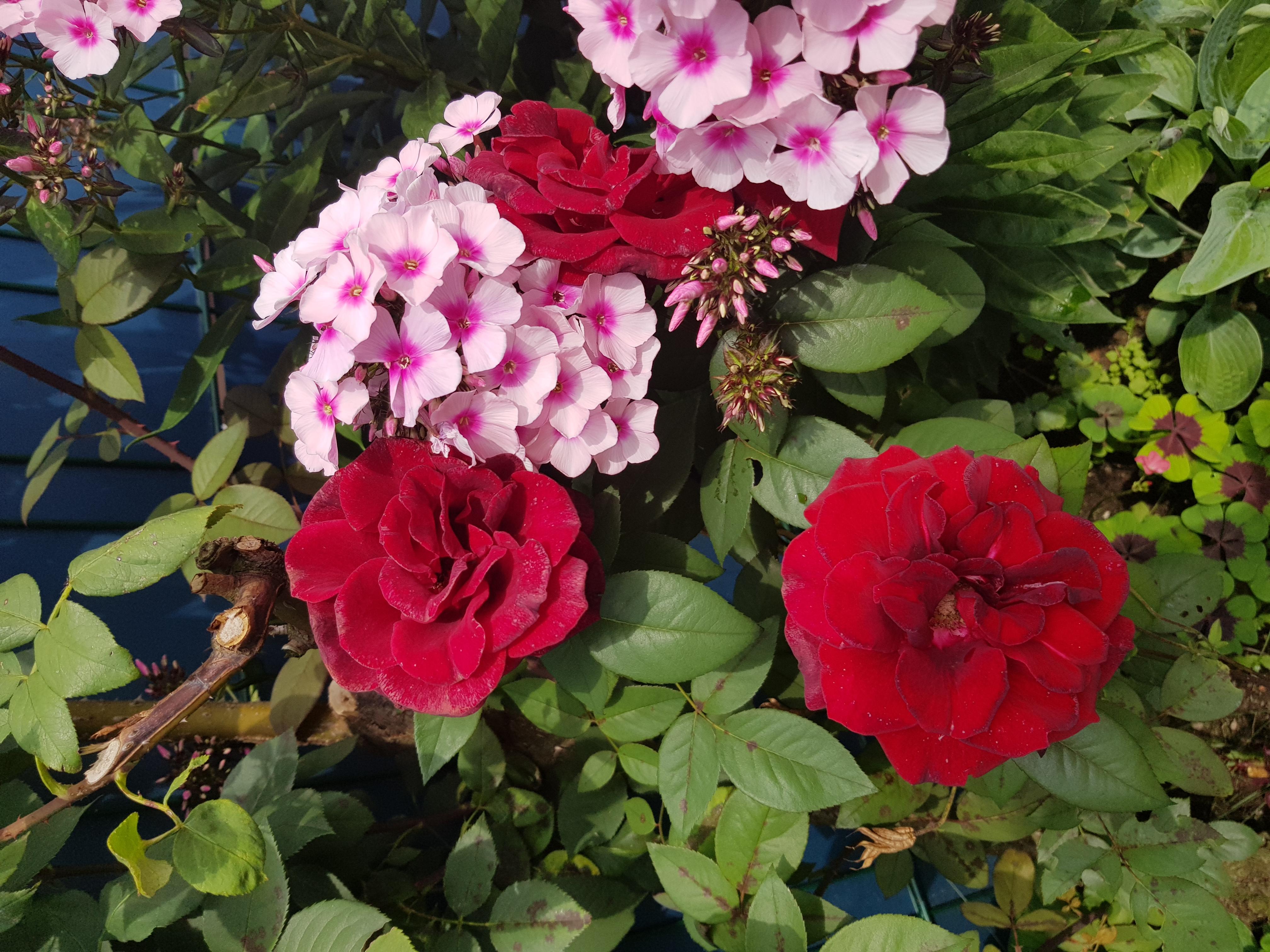 Просто красивые цветы