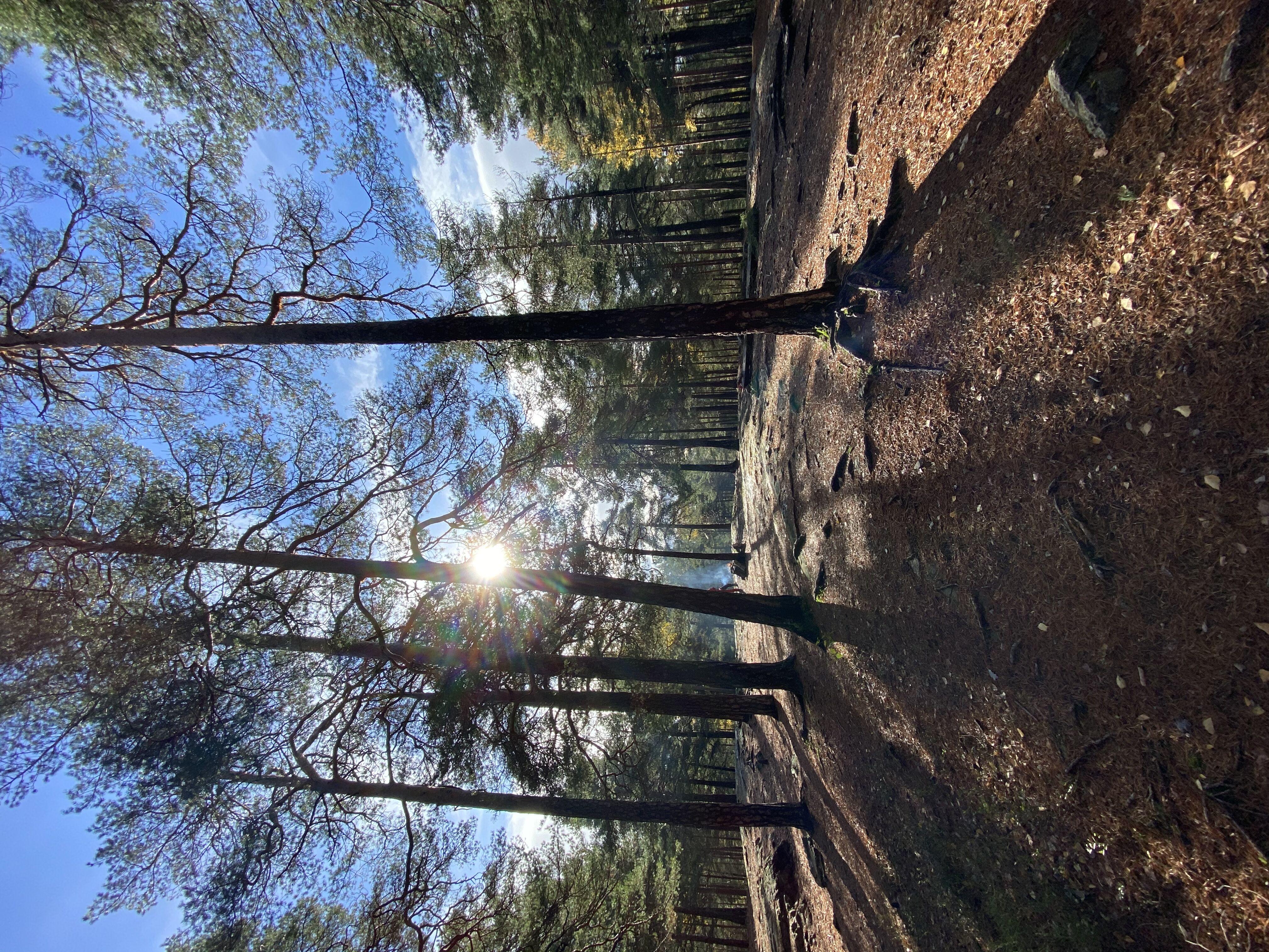 Forest weekend walk