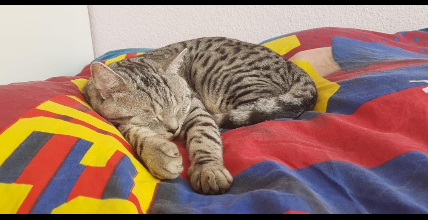 Котяка - высыпака