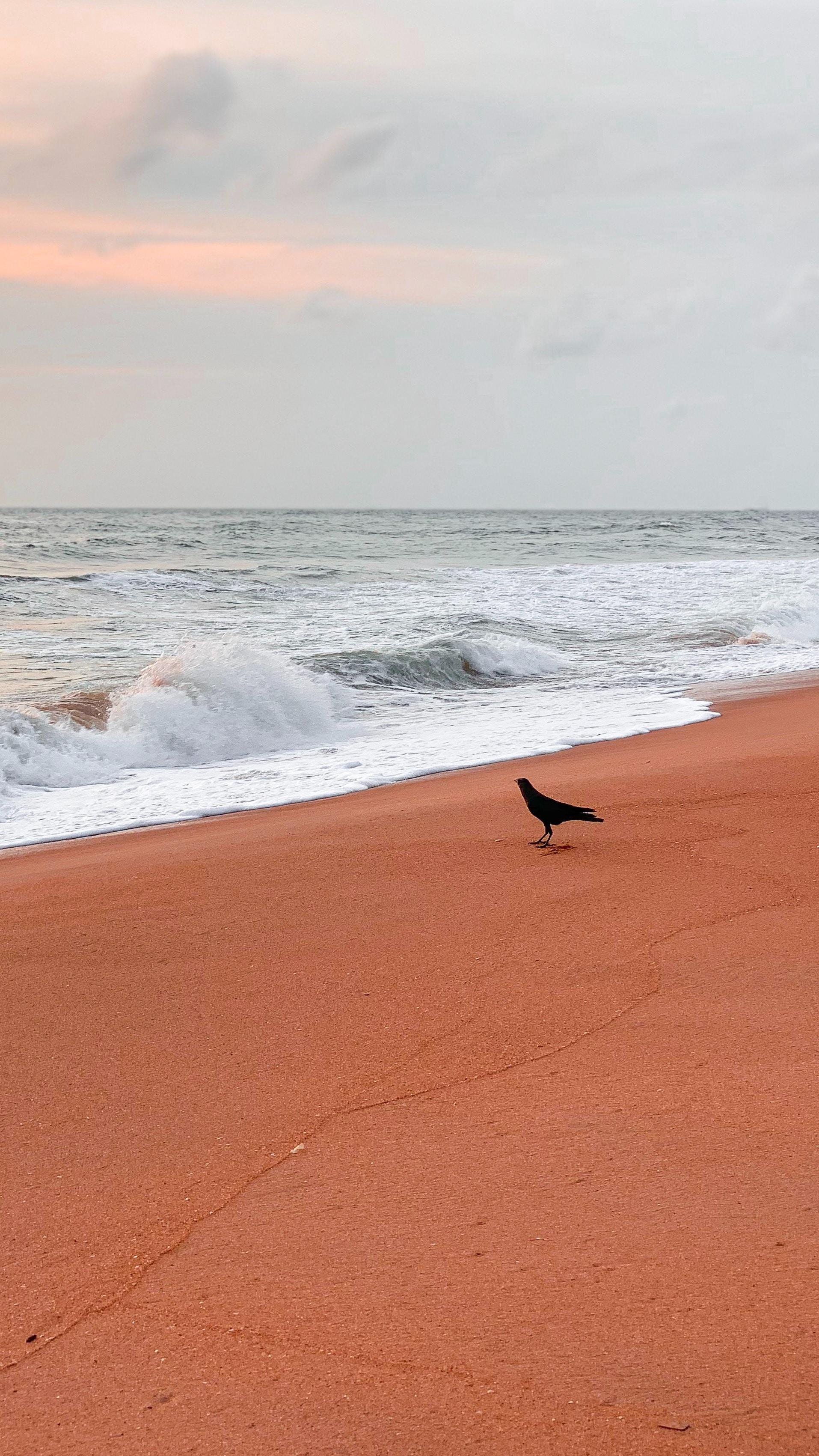 Відпочиньте на пляжі на горі Лавінія