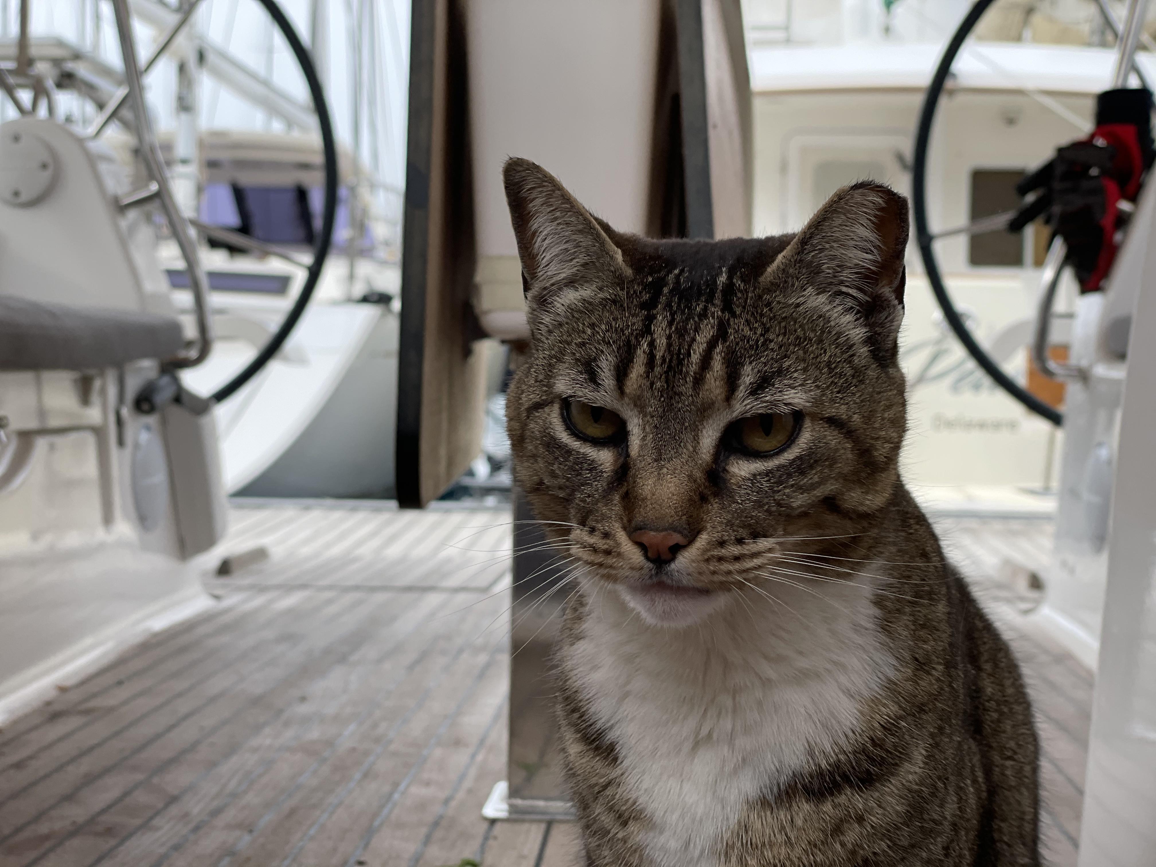 Кот - хозяин на яхте