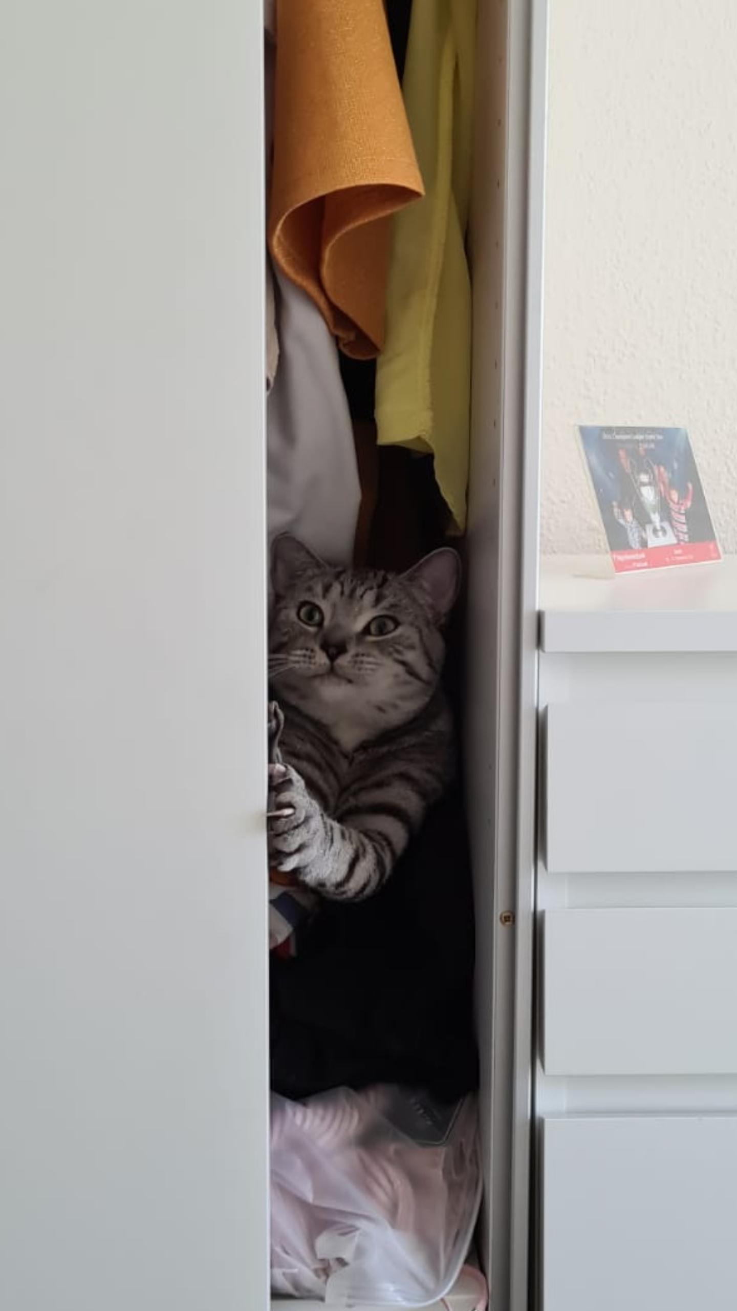 Котяка - за собой дверь закрывака